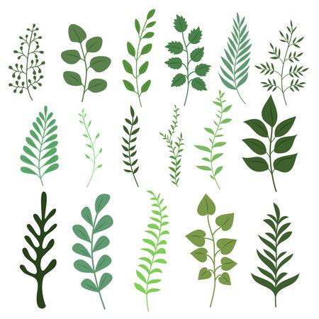 Illustration pour Plant branch with green garden leaves vector set. Branch green and leaf floral illustration - image libre de droit