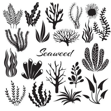 Illustration pour Aquarium seaweeds. Underwater plants, ocean planting. Vector seaweed black silhouette isolated set. Sea weed black, underwater sea ocean plant illustration - image libre de droit