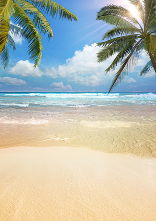 Photo pour Beach palm - image libre de droit