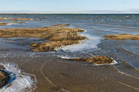 Photo pour Lake Kamyslybas is a large saltwater lake in Kazakhstan. seaweed on the shore - image libre de droit