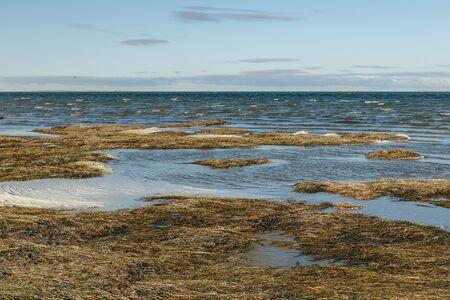 Photo pour Lake Kamyslybas is a large saltwater lake in Kazakhstan. - image libre de droit