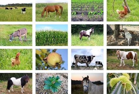 Foto de Collage of farm animals and fields - Imagen libre de derechos