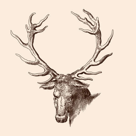 Illustration for The head of a forest deer with large antlers. Vector image of a medieval engraving on a beige background. - Royalty Free Image