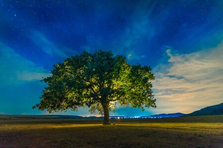 Photo pour Beautiful landscape with a lonely oak tree and a starry night sky with moon light, Dobrogea, Romania - image libre de droit