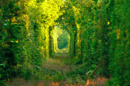 Natural tunnel of love formed by trees in Romania. Railroad removed.