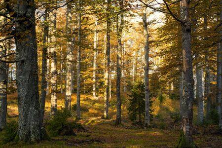 Photo pour Autumn trees in the mountains, vintage filter applied - image libre de droit