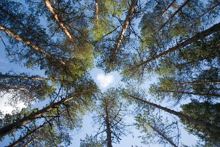 Photo pour Wild trees forming shape of a heart on sky background - image libre de droit