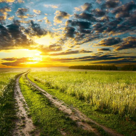 Photo for Road in field under sunset light - Royalty Free Image