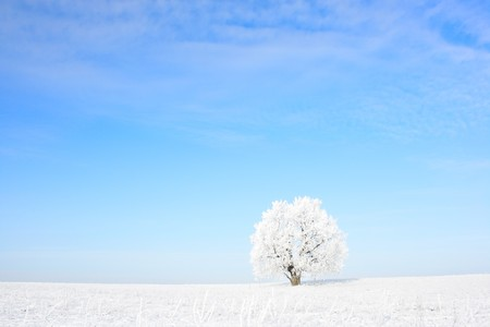 Alone frozen tree and clear blue skyの写真素材