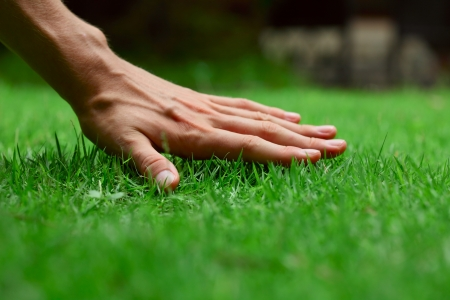 Hand on green lush grass