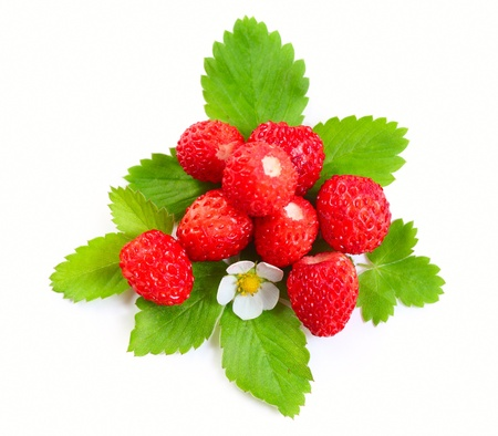 Wild strawberies heap with green leaves and flower isolated on white