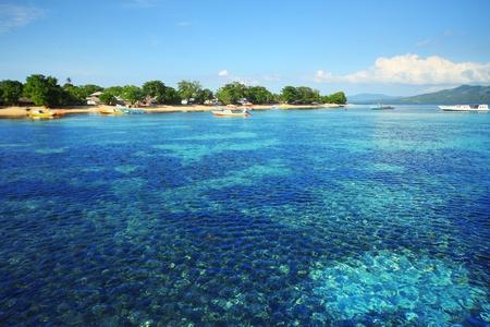 Coral reef in Bunaken national park. Area near village Bunaken. Sulawesi island. indonesia