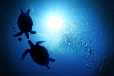 Collage of underwater world