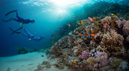 Photo pour Two free divers exploring coral reef wall with vivid marine life in the Red Sea. Egypt - image libre de droit