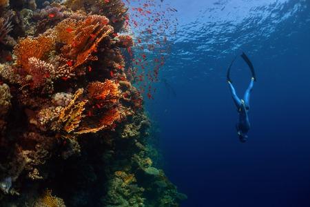 Photo pour Freediver descending along the vivid reef wall. Red Sea, Egypt - image libre de droit