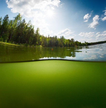 Split shot of the freshwater pond with forest above the surface and glare blank background underwater