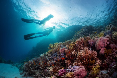 Photo for Two freedivers swimming underwater over vivid coral reef. Red Sea, Egypt - Royalty Free Image