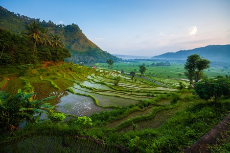 Photo pour Rice fields of the island of Bali at sunrise, Indonesia - image libre de droit
