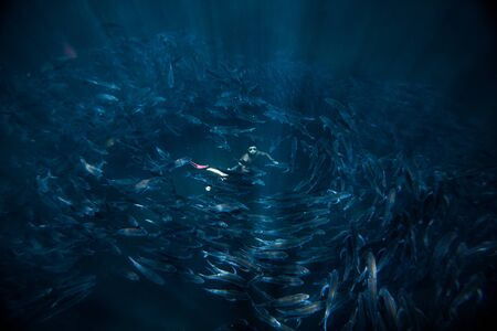 Photo pour Man freediver hovers in the middle of the fish whirlpool. School of fish spins around the human looking up from the depth - image libre de droit