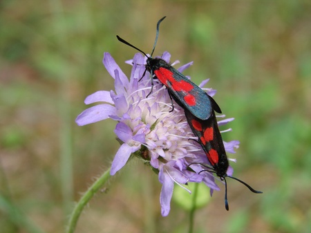 butterflies, sweet pair on flower