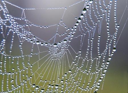 Photo pour spider web - image libre de droit