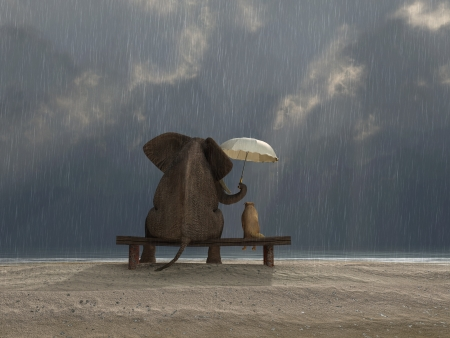 elephant and dog sit under the rainの写真素材