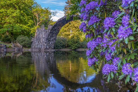 Blooming rhododendron flowers in a park in Kromlau, germany, devil bridge in the background