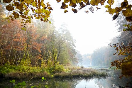 Photo pour Autumn landscape. Foggy forest and river. Morning nature in a fog. Branch of tree. Yellow foliage - image libre de droit