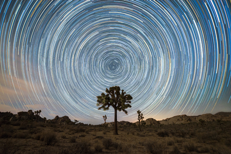 Photo for Joshua Tree Under the North Star - Royalty Free Image