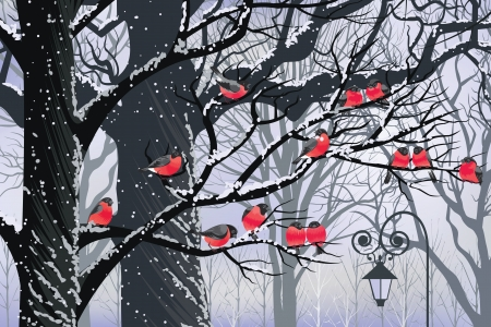 Bullfinches on trees in winter city