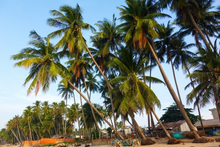 beach, palm trees in the bac