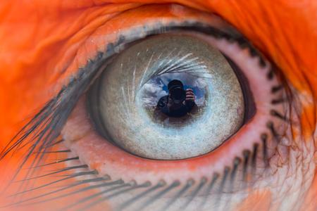 Photo pour Eye of the Southern Ground Hornbill - image libre de droit