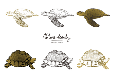 Illustration pour Vector illustration. Pen style vector sketch. Terrapins and turtles. Vector objects set. - image libre de droit