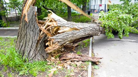 Photo pour The aftermath of a hurricane. Broken trees, fallen road signs. - image libre de droit