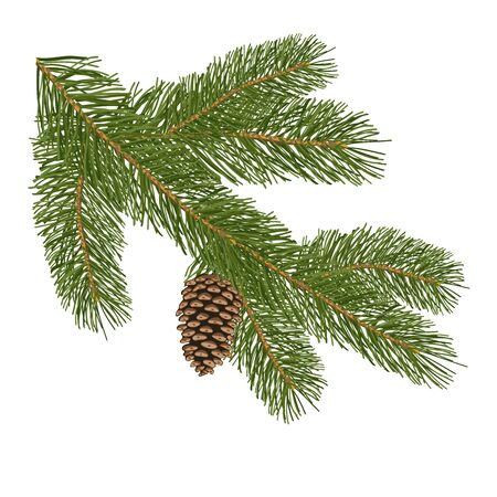 Illustration pour Christmas tree branch with pine cones isolated on white background. Decorative element for Christmas cards. Vector illustration.  - image libre de droit