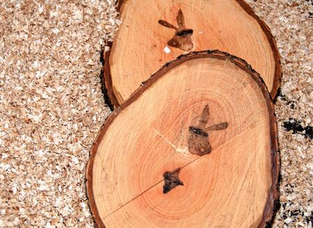 Pine tree slice with annual rings and rabbit silhouette