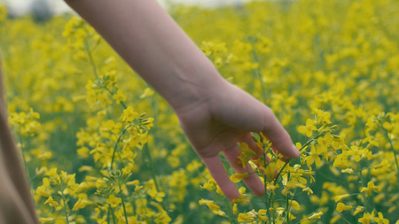 Photo pour Female hand touches yellow flowers. Woman touching beautiful yellow flowers - image libre de droit