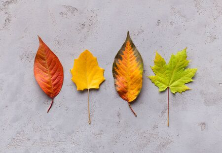 Photo for Bright and creative composition of different colorful autumn fallen leaves on grey - Royalty Free Image