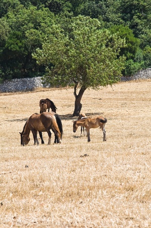 Horses grazing in a paddock.