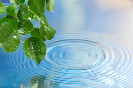 Green leaves over water with ripples background