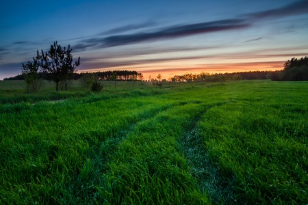 Photo pour Beautiful early summertime landscape with sunset over green field - image libre de droit
