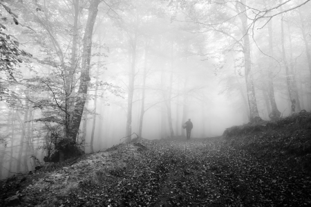 person mushroom hunting in autumnal forest in the morning