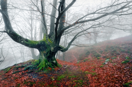 creepy and twisted tree in foggy forest