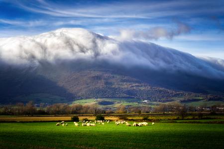 sheep in ayala valley
