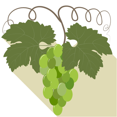 Bunch of green grapes with leaves isolated on white background, vector illustration
