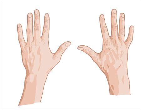 Ilustración de Two palms sketch - Imagen libre de derechos