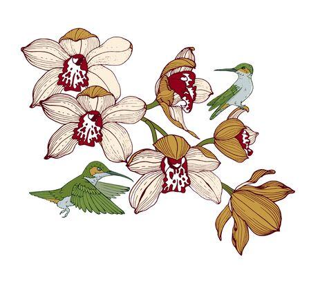 Illustration pour orchids and hummingbirds, composition for design, vector illustration - image libre de droit