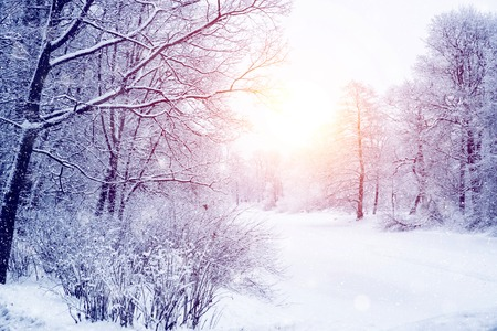Photo for Winter wonderland scene background, landscape. Trees, forest in snow. Christmas, New Year time - Royalty Free Image