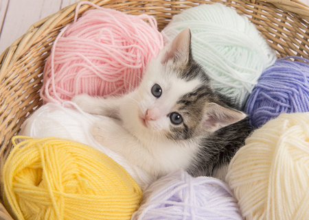 Cute baby cat between pastel colored balls of wool in a basket looking up