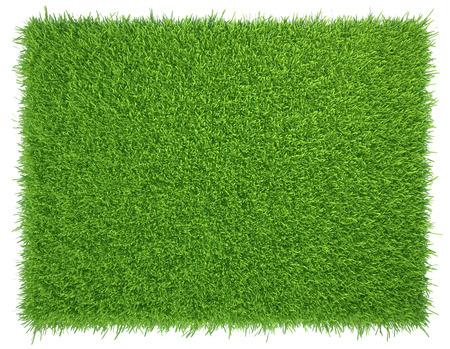 Green grass. natural background texture. fresh spring green grass.